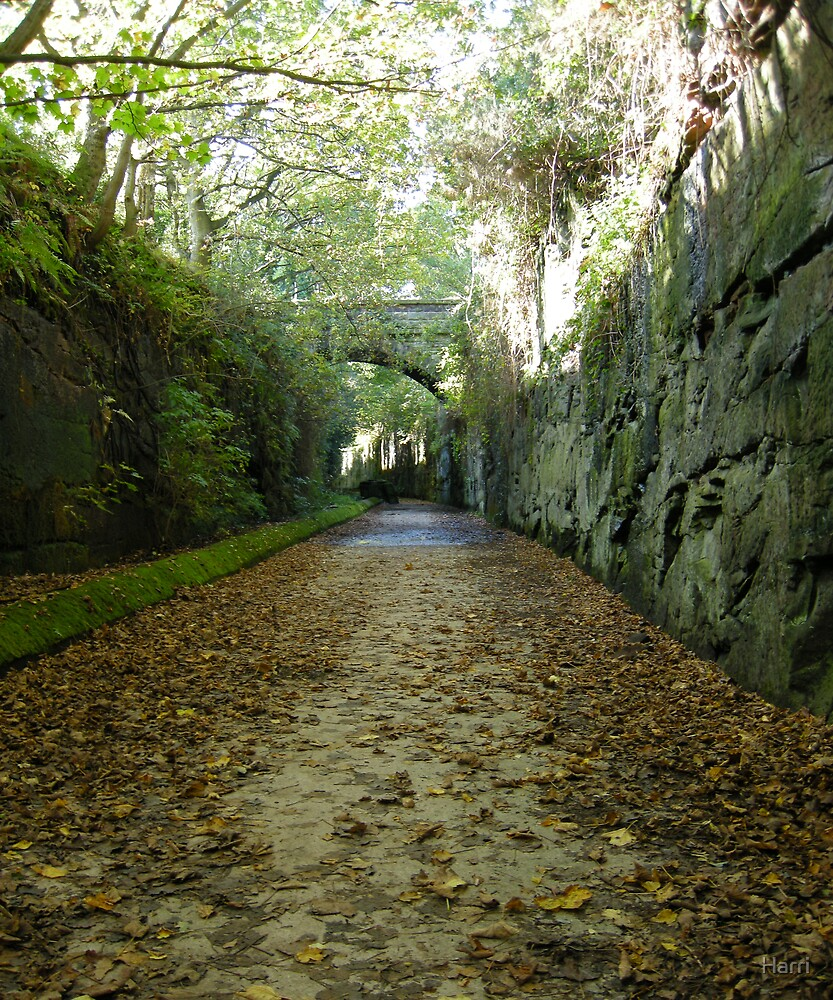 The Wirral Way by Harri