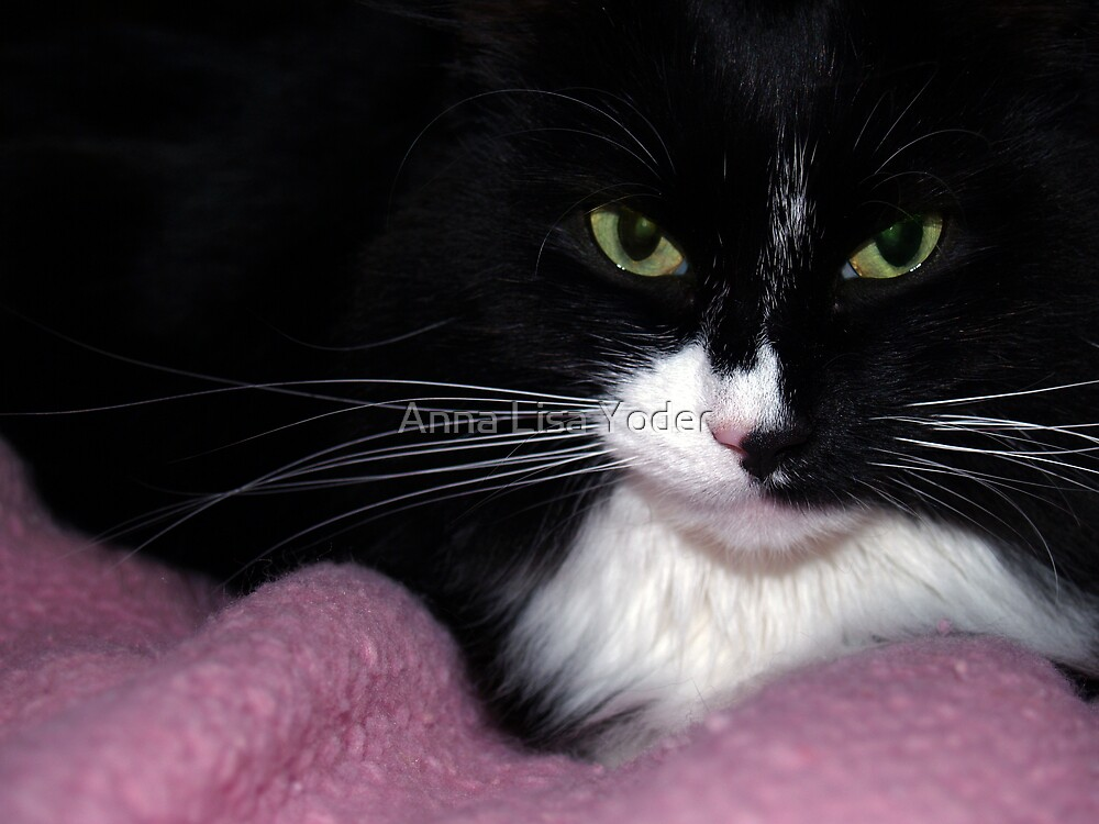 Black & White Cat on Pink by Anna Lisa Yoder