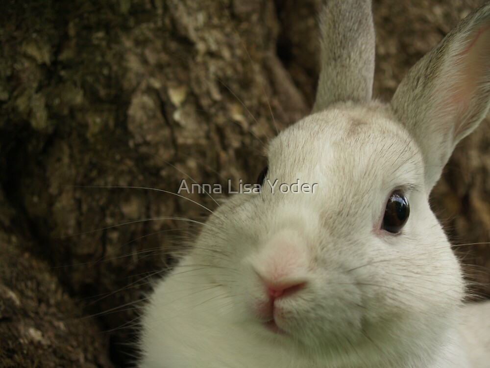 Dwarf Rabbit by Tree by Anna Lisa Yoder