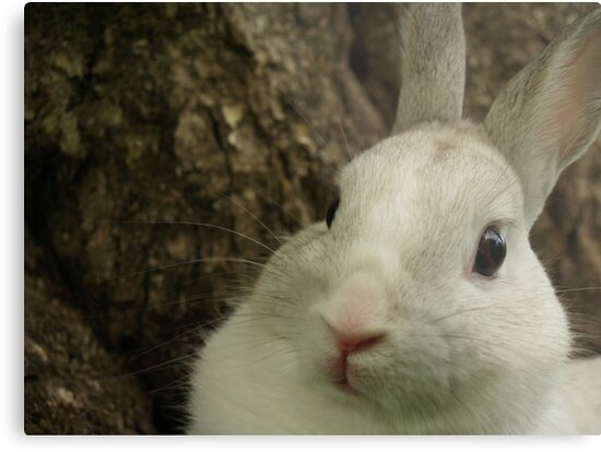 Dwarf Rabbit by Tree by Anna Lisa Yoder
