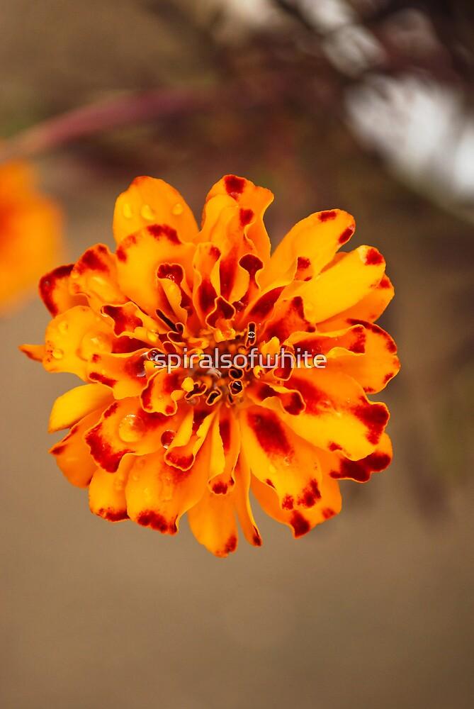 bright orange by spiralsofwhite