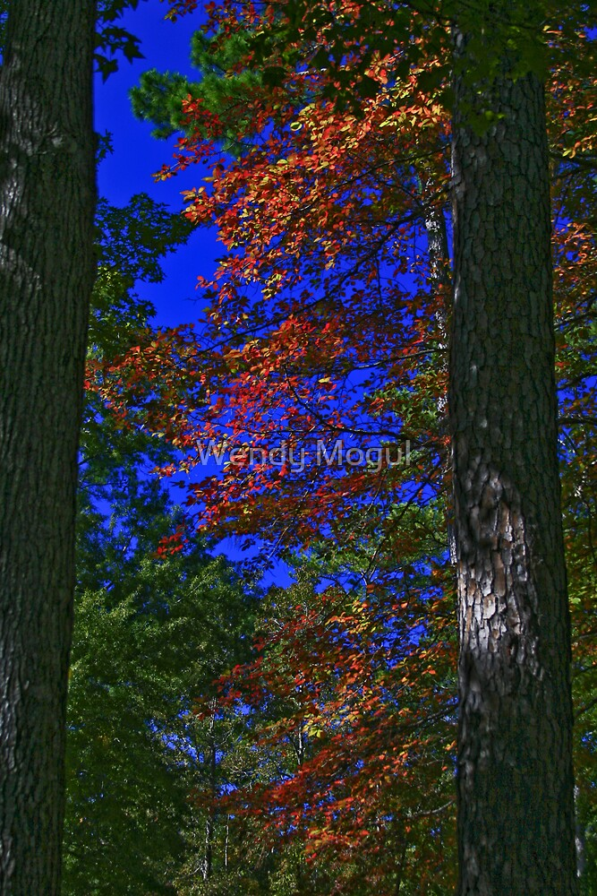Fall Colors II by Wendy Mogul