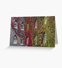 Red and green ivy vines Greeting Card