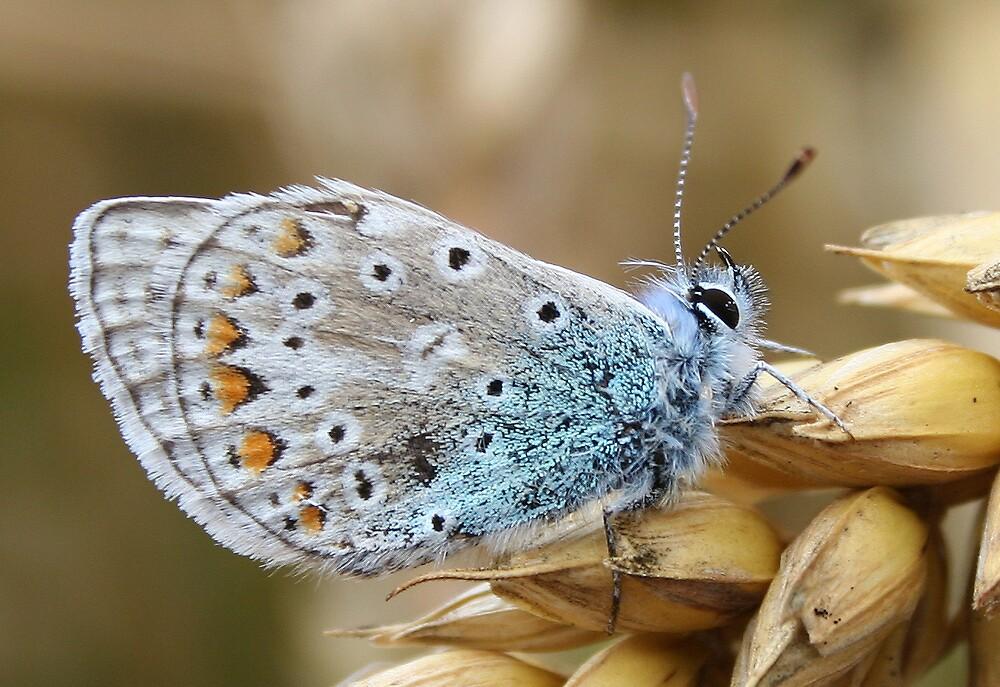 butterfly by Slinky2012