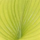 Pattern on leaf by shortarcasart