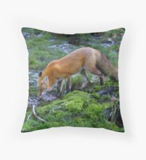 Red fox (Vulpes vulpes) drinking water in the Algonquin Park forest in Canada Throw Pillow