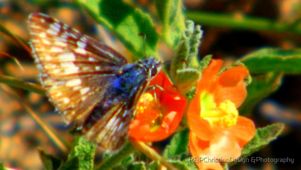 Flowers And Butterfly by R&PChristianDesign &Photography