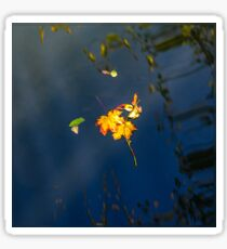 Autumn maple leaf on the blue lake water, calm colorful postcard Sticker