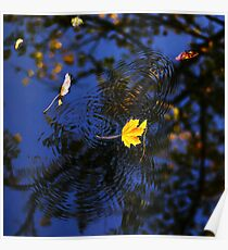 Autumn maple leaf on the blue lake water, calm colorful postcard Poster