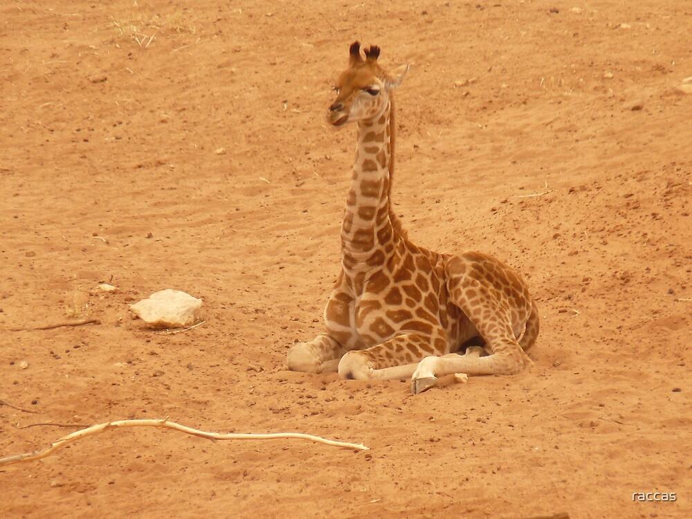 """Baby Giraffe"" by raccas"