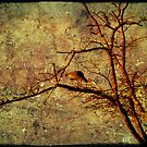 Bayou Tree by Jonicool