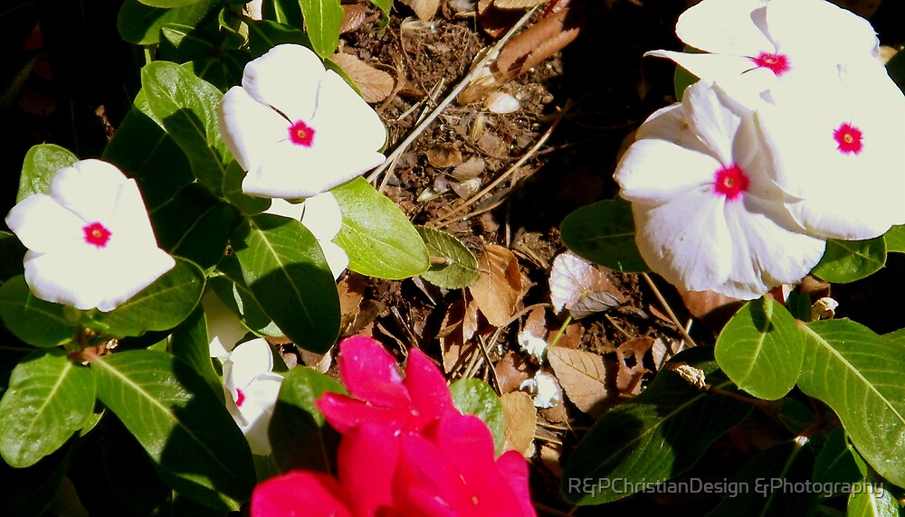 Little Flowers by R&PChristianDesign &Photography