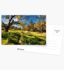 Australian Bush Postcards