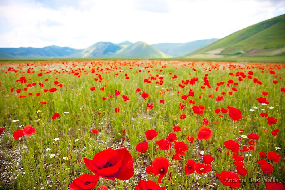 Alpine Wildflowers by Andrew Bret Wallis