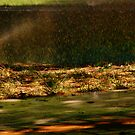 Sprinkler In The Park by R&PChristianDesign &Photography