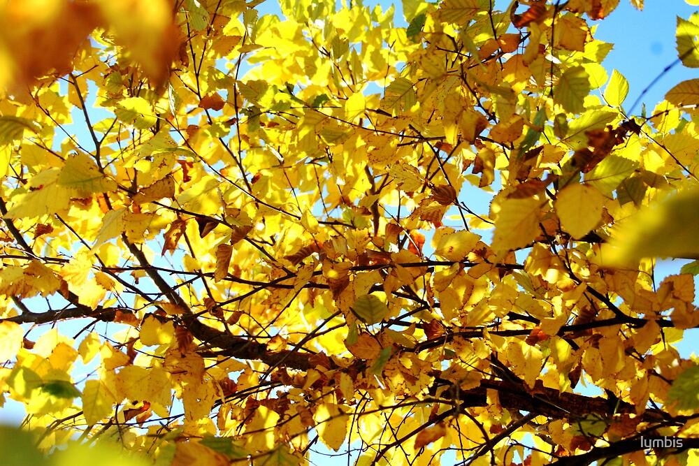 Yellow  by Lynn Stratton