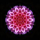 Dahlia in kaleidoscope by missmoneypenny