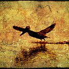 Bayou Take-Off by Jonicool