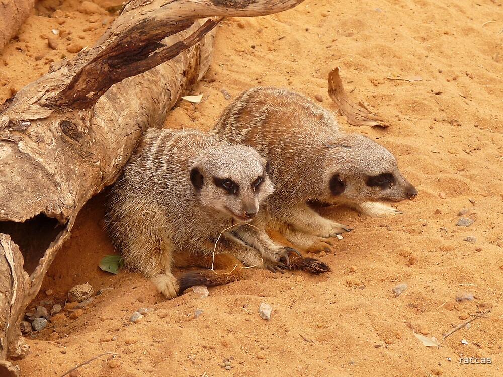 """""""Stroppy Meerkat"""" by raccas"""