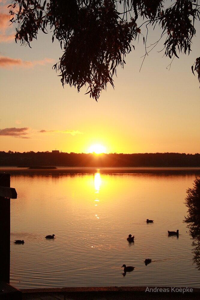 Sunrise over Lake Joondalup by Andreas Koepke