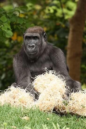 Gorilla by margotk