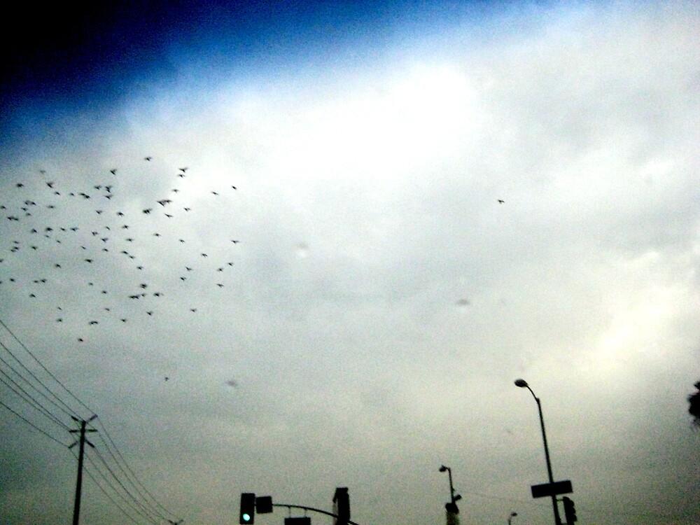 Birds fly high by SamanthaJune