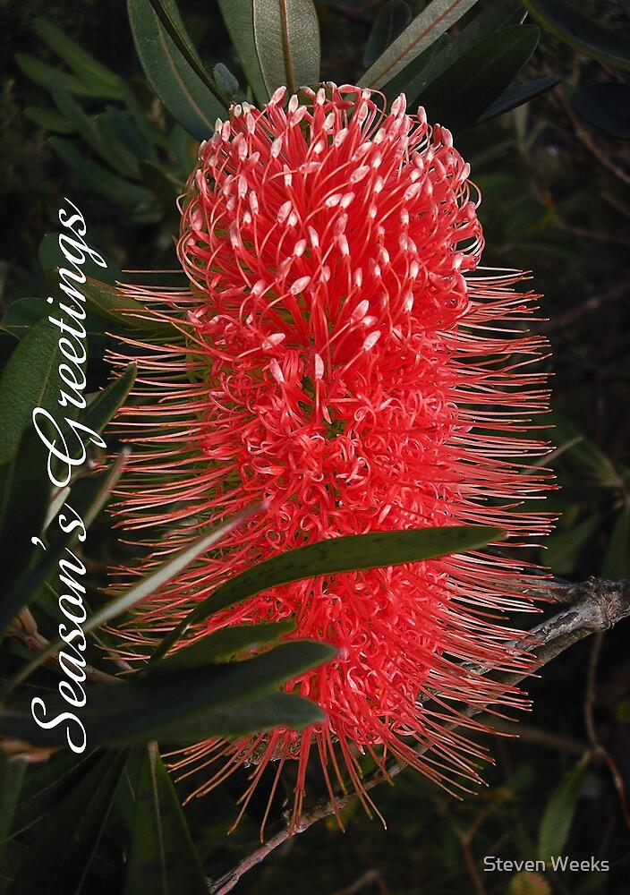 Banksia, Season's Greetings by Steven Weeks