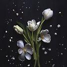 White tulips by Cristina Colli