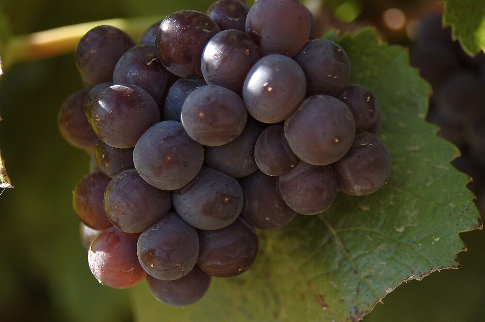 Grapes on the Vine by Jack Walker