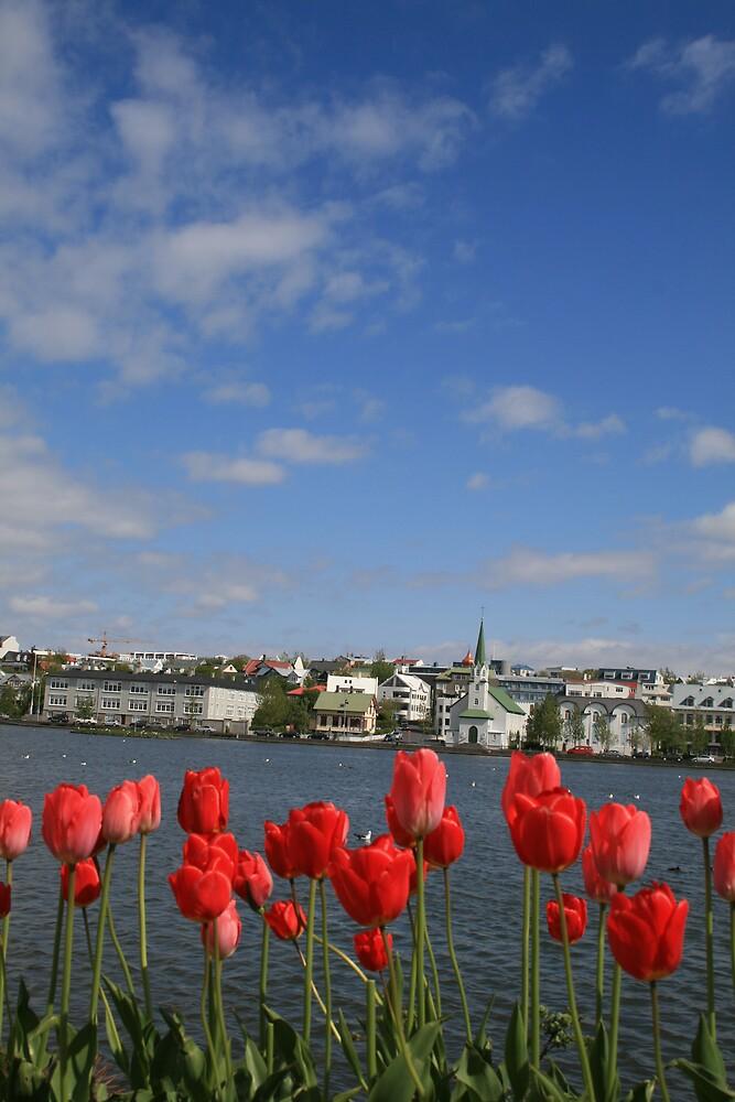 Icelandic spring by KudnoYerta