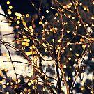 Bokeh season! by Karin Elizabeth