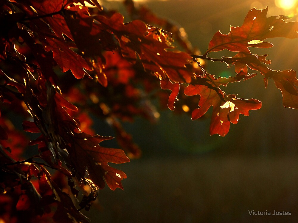 Burnished Oak by Victoria Jostes