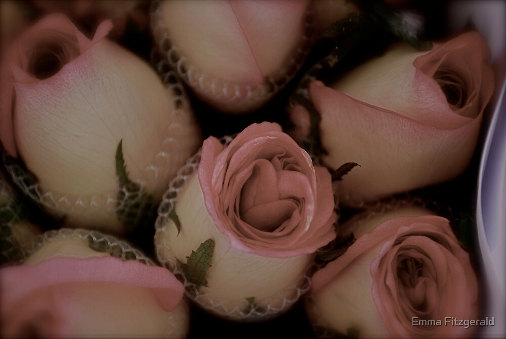 Antique Roses by Emma Fitzgerald