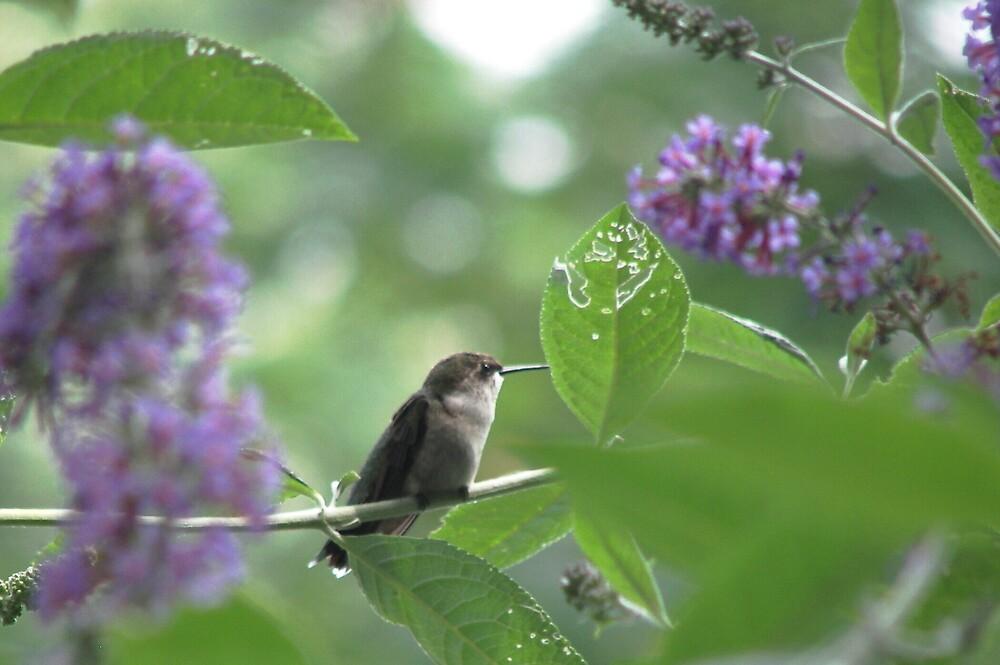 The Hummingbird by madmac57
