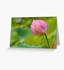 colorful lotus Greeting Card
