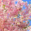 Cherry Blossoms by Mys  Lyke Meeh