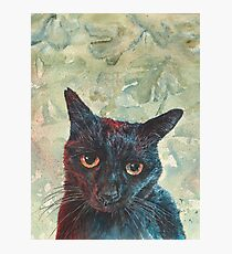 Pooky the Black Cat Photographic Print