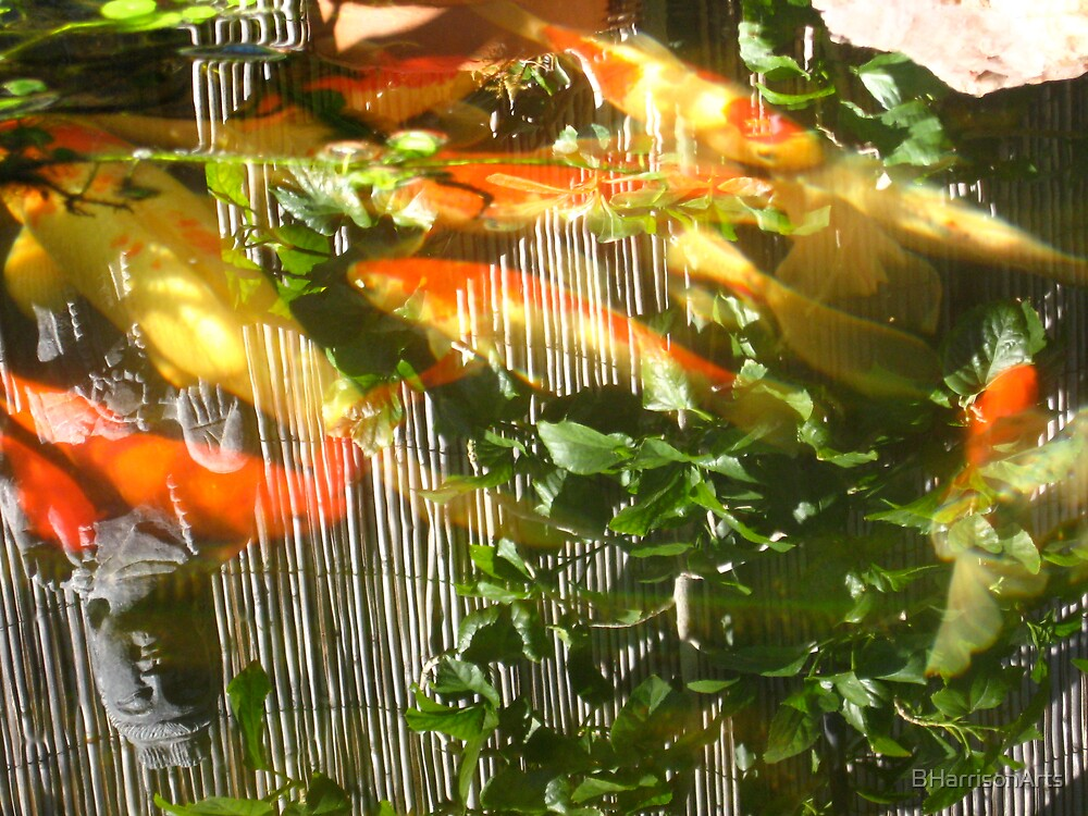 Koi Pond Reflections by BHarrisonArts
