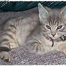 Kira Kitty by judygal