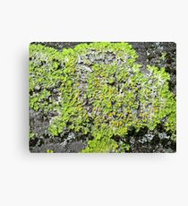 Moss on tree in Richmond Park, London Canvas Print