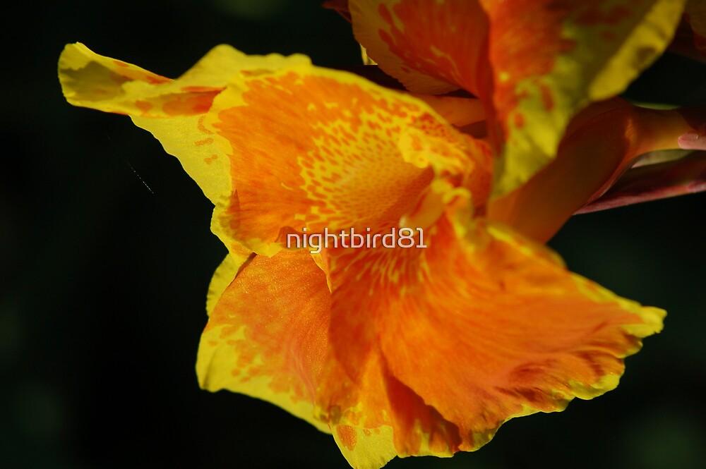 Coral Flower by nightbird81