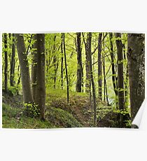 The forest along the Rhone river Poster