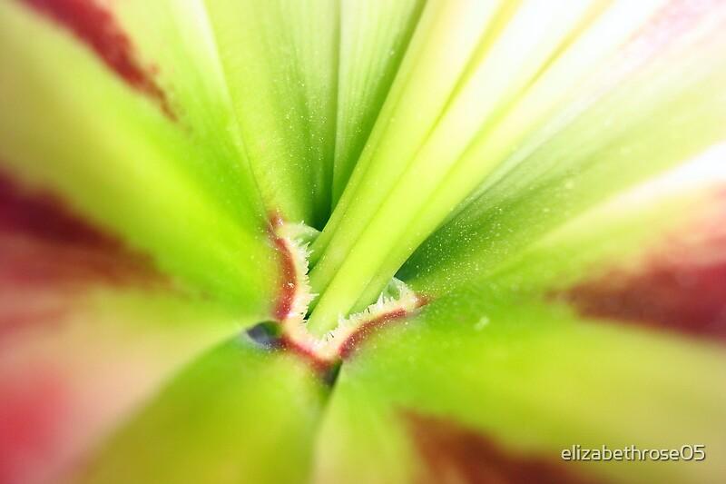 Flower by elizabethrose05