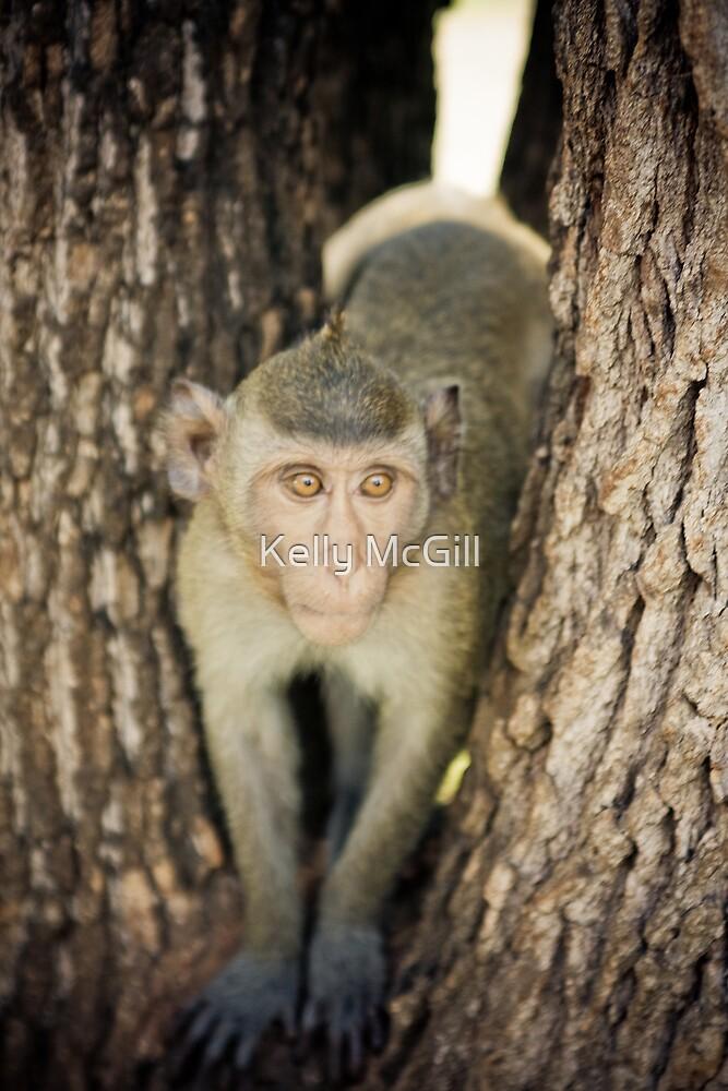 Wild Monkey, Thailand by Kelly McGill
