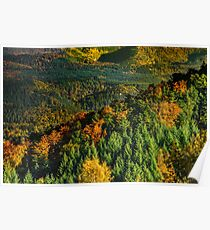 Colorful autumnal forests in Alsace, France, seasonal specific, natural landscape Poster
