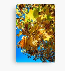 Vivid autumnal colors of leaves in the park, Strasbourg, France Canvas Print