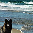 The Old Dog And The Sea by Bine