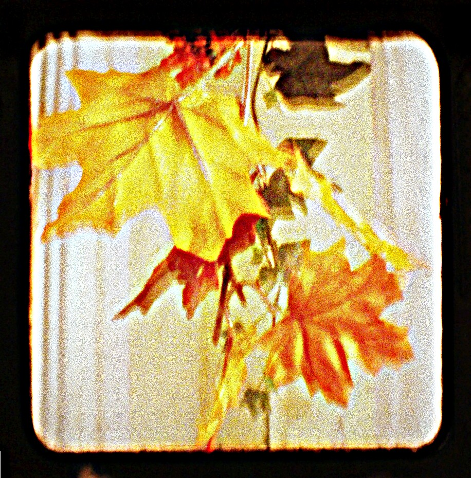 fall  by Shannon Byous Ruddy
