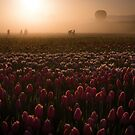 Tulip Field in the Fog by Rubyheart