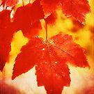 Flaming Autumn by Anita Pollak
